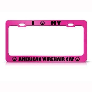 American Wirehair Cat Pink Metal license plate frame Tag