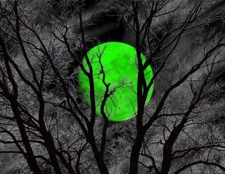 Large+Green+Tree Moon+Matted+Home Wall Art Picture